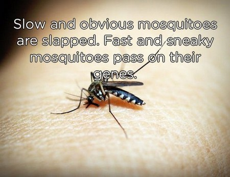 slow and obvious mosquitos copy These shower thoughts are a real mind f*ck (20 Photos)