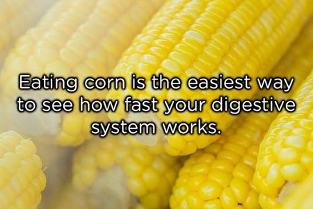 eating corn is the easiest way copy These shower thoughts are a real mind f*ck (20 Photos)