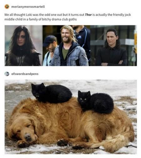 thor memes 30 photos 5 Thor memes that deserve thunderous applause (30 Photos)