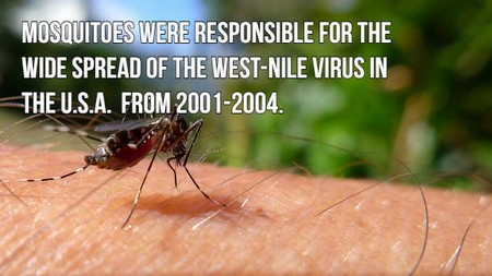 blood sucking facts about those fing mosquitoes photos 16 Blood sucking facts about those f***ing mosquitoes! (17 Photos)
