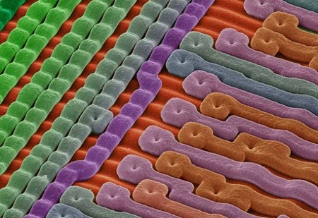 electron microscope 3 Mind blowing everyday objects under an electron microscope (18 Photos)