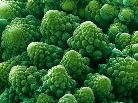 electron microscope 8 Mind blowing everyday objects under an electron microscope (18 Photos)