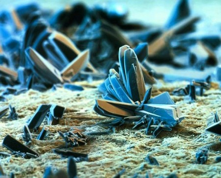 electron microscope 9 Mind blowing everyday objects under an electron microscope (18 Photos)