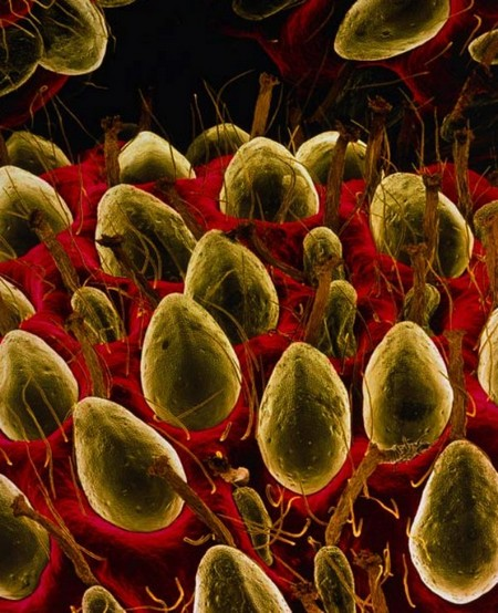 electron microscope 12 Mind blowing everyday objects under an electron microscope (18 Photos)