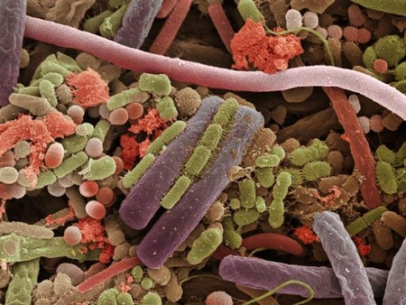 electron microscope 14 Mind blowing everyday objects under an electron microscope (18 Photos)