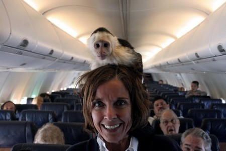 you can actually bring some insane things on an airplane x photos 1 You can actually bring some insane things on an airplane (22 Photos)
