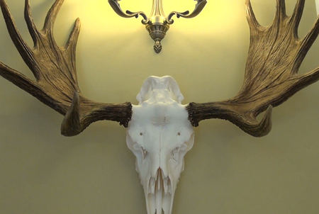 hunting trophy antlers horns and bone skull of moose elk on old manor room wall 4k kgzfr f0003 You can actually bring some insane things on an airplane (22 Photos)