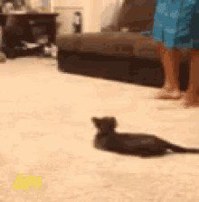cat saturday scaredy cat edition 17 gifs 143 Cat Saturday: Scaredy Cat Edition (17 GIFs)