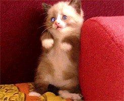 cat saturday scaredy cat edition 17 gifs 23 Cat Saturday: Scaredy Cat Edition (17 GIFs)