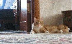 cat saturday scaredy cat edition 17 gifs 153 Cat Saturday: Scaredy Cat Edition (17 GIFs)