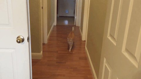 cat saturday scaredy cat edition 17 gifs 173 Cat Saturday: Scaredy Cat Edition (17 GIFs)