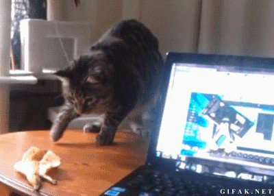 cat saturday scaredy cat edition 17 gifs 19 Cat Saturday: Scaredy Cat Edition (17 GIFs)