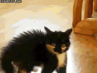 cat saturday scaredy cat edition 17 gifs 33 Cat Saturday: Scaredy Cat Edition (17 GIFs)