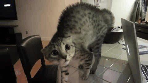 cat saturday scaredy cat edition 17 gifs 43 Cat Saturday: Scaredy Cat Edition (17 GIFs)