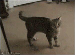 cat saturday scaredy cat edition 17 gifs 53 Cat Saturday: Scaredy Cat Edition (17 GIFs)