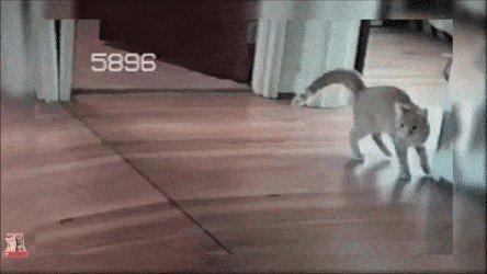 cat saturday scaredy cat edition 17 gifs 83 Cat Saturday: Scaredy Cat Edition (17 GIFs)
