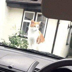 cat saturday scaredy cat edition 17 gifs 93 Cat Saturday: Scaredy Cat Edition (17 GIFs)