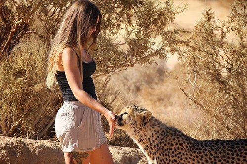 meet lisa the cute wildlife worker who raised a pack of cheetahs as her own 29 photos videos 10 Meet Lisa, the cute wildlife worker who raised a pack of cheetahs (30 Photos & Video)