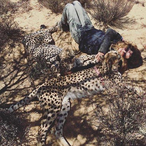 meet lisa the cute wildlife worker who raised a pack of cheetahs as her own 29 photos videos 11 Meet Lisa, the cute wildlife worker who raised a pack of cheetahs (30 Photos & Video)