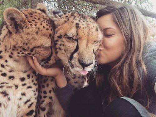 meet lisa the cute wildlife worker who raised a pack of cheetahs as her own 29 photos videos 21 Meet Lisa, the cute wildlife worker who raised a pack of cheetahs (30 Photos & Video)