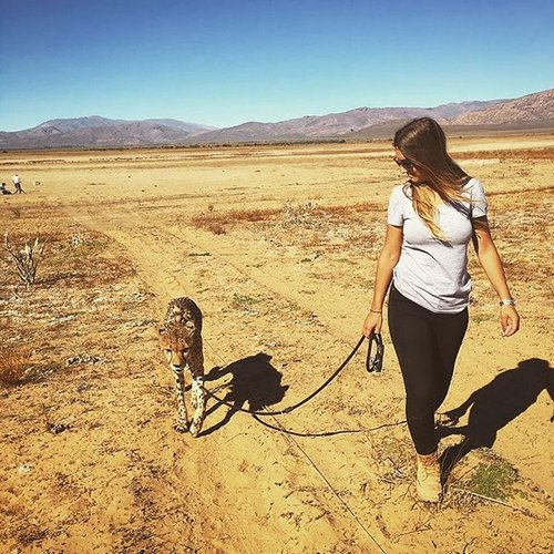 meet lisa the cute wildlife worker who raised a pack of cheetahs as her own 29 photos videos 252 Meet Lisa, the cute wildlife worker who raised a pack of cheetahs (30 Photos & Video)