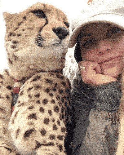 meet lisa the cute wildlife worker who raised a pack of cheetahs as her own 29 photos videos 59 Meet Lisa, the cute wildlife worker who raised a pack of cheetahs (30 Photos & Video)