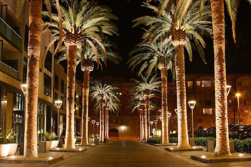 san jose california palm tree 2010 Ranking the US cities with the most nice days (22 photos)