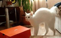 just a buncha fookin scaredy cats gifs 112 Just a buncha fookin scaredy cats (17 GIFs)