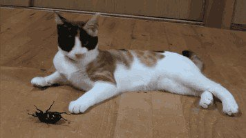 just a buncha fookin scaredy cats gifs 122 Just a buncha fookin scaredy cats (17 GIFs)