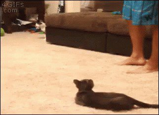 just a buncha fookin scaredy cats gifs 132 Just a buncha fookin scaredy cats (17 GIFs)