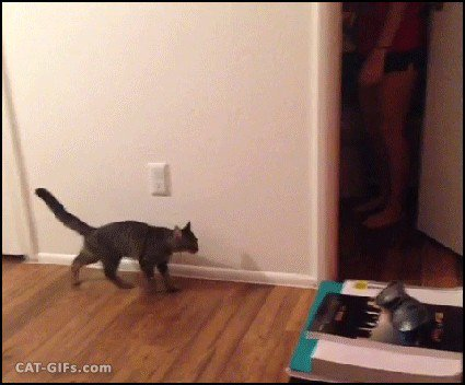 just a buncha fookin scaredy cats gifs 16 Just a buncha fookin scaredy cats (17 GIFs)