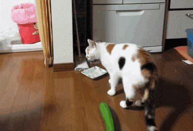 66d08f4f32f84d3fa1fd5002447c60cc th1 Just a buncha fookin scaredy cats (17 GIFs)