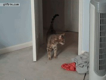 just a buncha fookin scaredy cats gifs 31 Just a buncha fookin scaredy cats (17 GIFs)