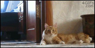 just a buncha fookin scaredy cats gifs 61 Just a buncha fookin scaredy cats (17 GIFs)