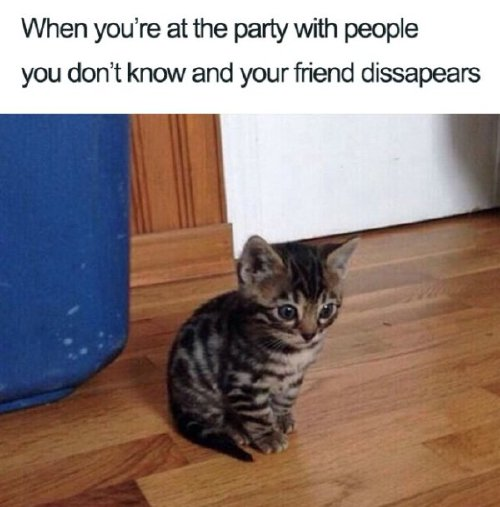 intro 7 Cancel all your plans for these introvert memes (30 Photos)