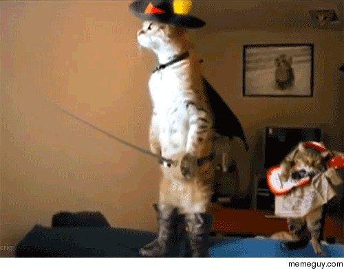 pets versus halloween decorations 1814 Halloween pets are heckin spooky (28 photos)