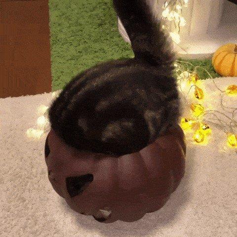 pets versus halloween decorations 8115 Halloween pets are heckin spooky (28 photos)