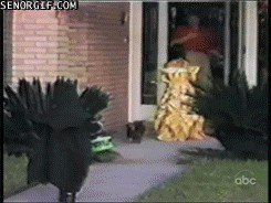 pets versus halloween decorations 10215 Halloween pets are heckin spooky (28 photos)
