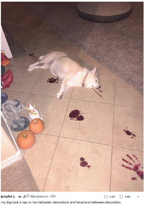 pets versus halloween decorations 251 Halloween pets are heckin spooky (28 photos)