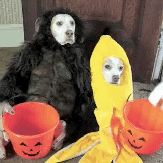 pets versus halloween decorations 1615 Halloween pets are heckin spooky (28 photos)
