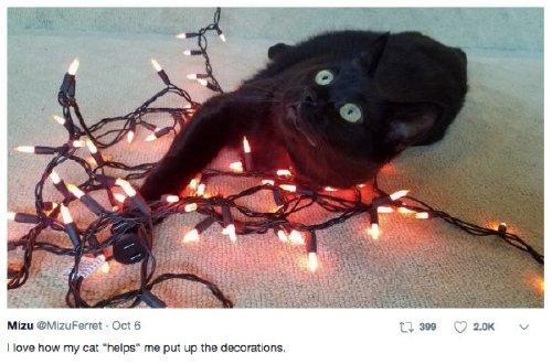 pets versus halloween decorations 253 Halloween pets are heckin spooky (28 photos)