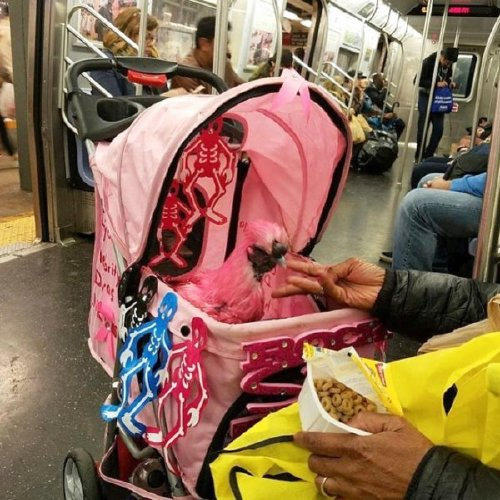 crazy people riding subway bizarre 9 Subways are not where normal happens (38 Photos)