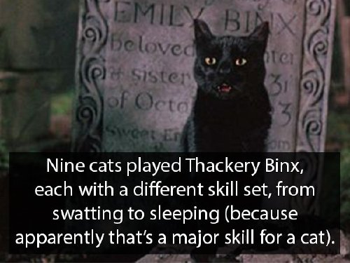 hocus pocus 6 Youre never too old for Hocus Pocus facts (18 Photos)