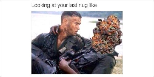 a copious amount of cannabis memes 15 Puff, puff and pass me the memes (27 Photos)