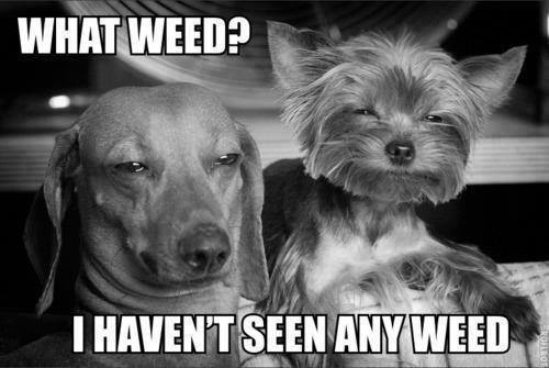 a copious amount of cannabis memes 19 Puff, puff and pass me the memes (27 Photos)
