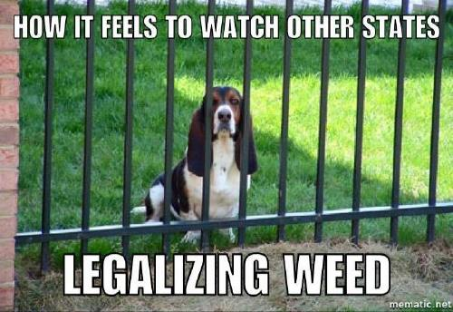 a copious amount of cannabis memes 3 Puff, puff and pass me the memes (27 Photos)