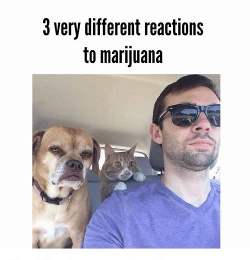 a copious amount of cannabis memes 6 Puff, puff and pass me the memes (27 Photos)