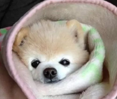these bundled up pups are read for the cold 13 These bundled up pups are ready for the cold (31 photos)