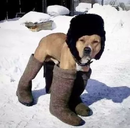 these bundled up pups are read for the cold 15 These bundled up pups are ready for the cold (31 photos)