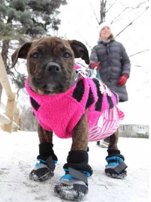 these bundled up pups are read for the cold 16 These bundled up pups are ready for the cold (31 photos)